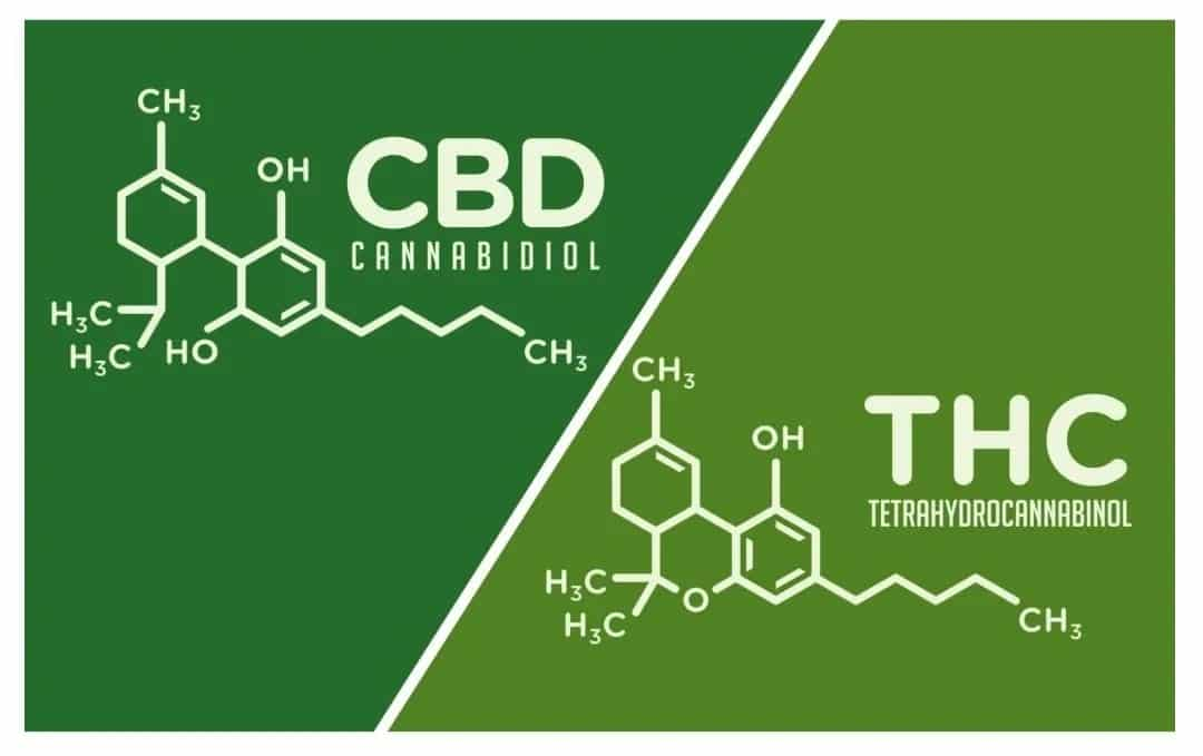 THC vs CBD | The Differences