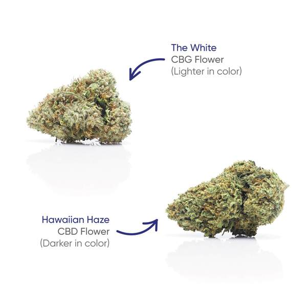 CBG+CBD Hawaiian Haze Flower