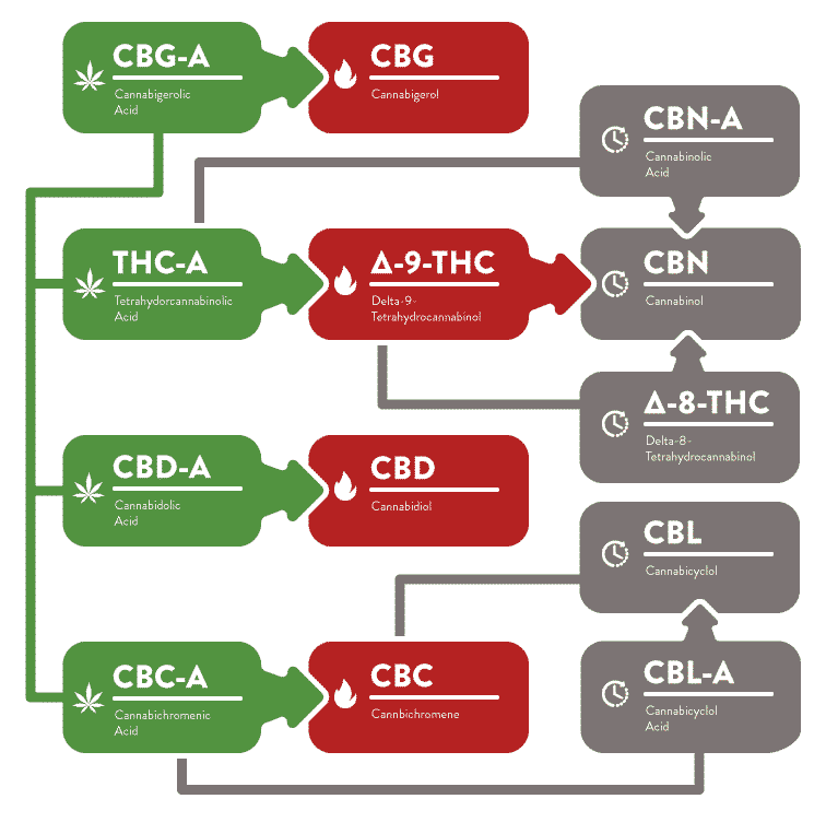 Cannabinoid Conversion Chart