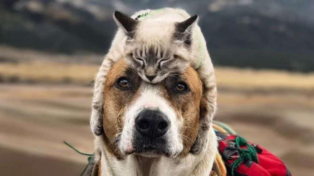 The Benefits of CBD Oil For Dogs & Cats