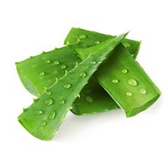 Photo of Aloe Leaf Juice