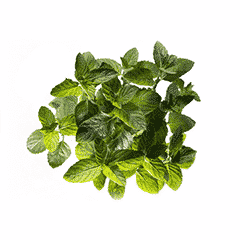 Photo of Spearmint