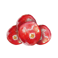 Dried Cranberry Photo