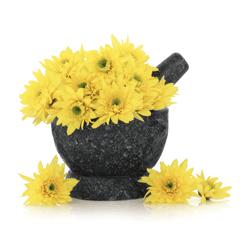 Photo of Chrysanthemum Flowers
