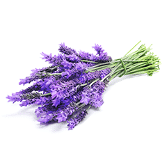 Photo of Lavender