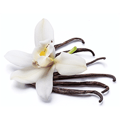 Photo of Vanilla Extract