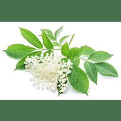 Photo of Elderflower