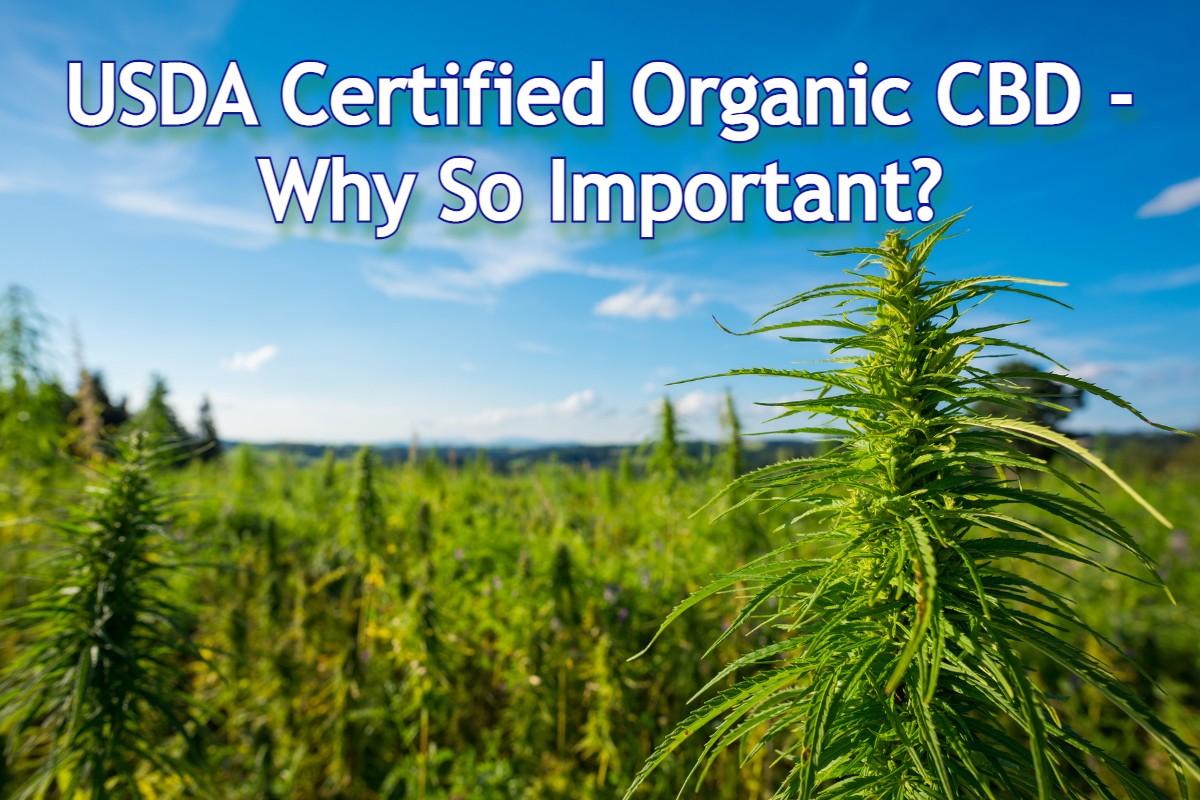 USDA Certified Organic CBD - Why So Important - Main CBD Blog Post Image