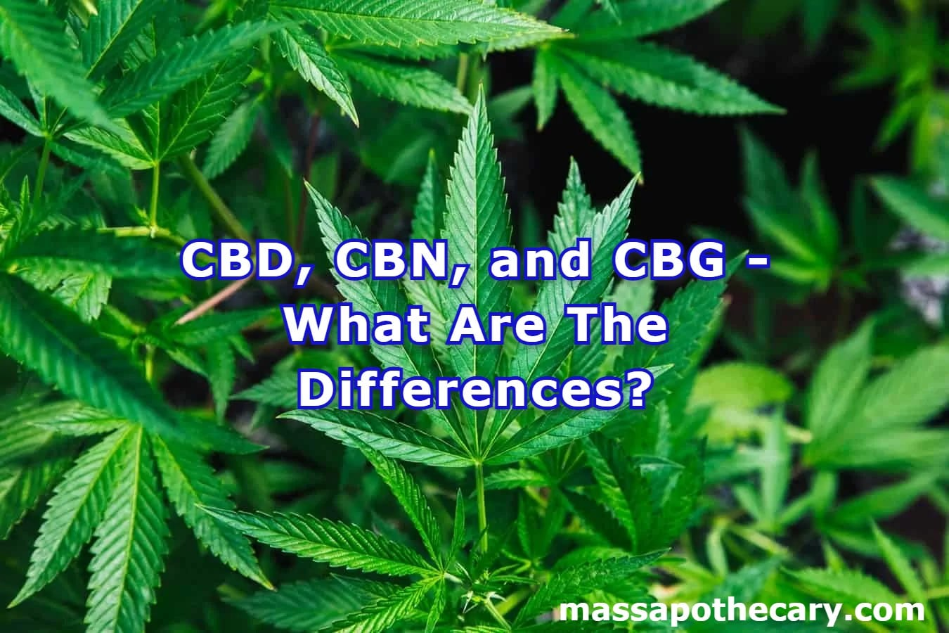 CBD, CBN, and CBG - What Are The Differences - The Mass Apothecary CBD Store